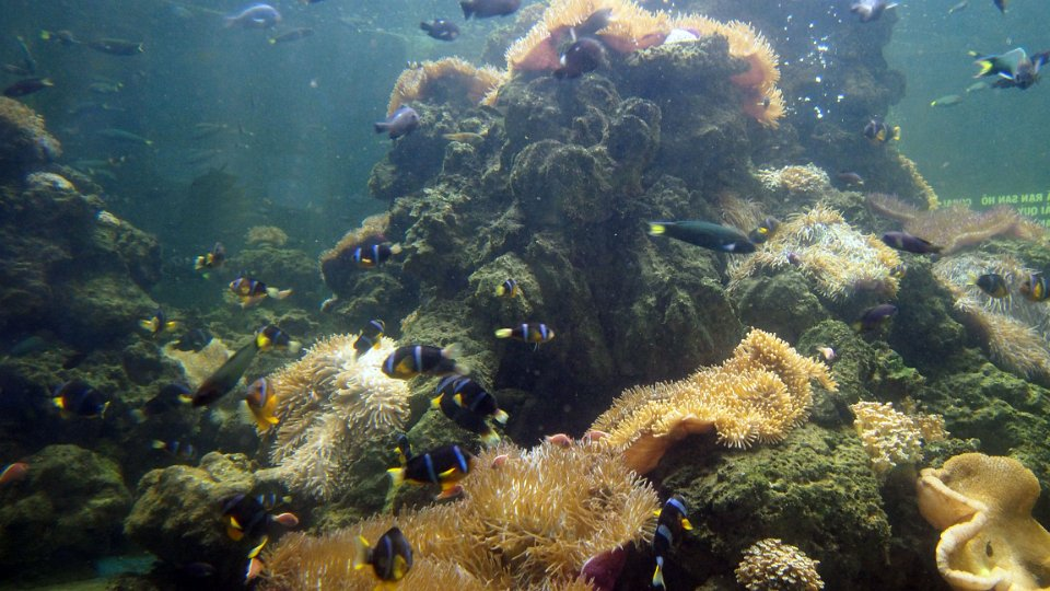 Vietnam - Nha Trang - Tri Nguyen Aquarium and snorkeling